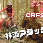 前人未到の全日本トライアルV10・8連覇チャンピオンが、CRF250Lで林道アタックやってみた!