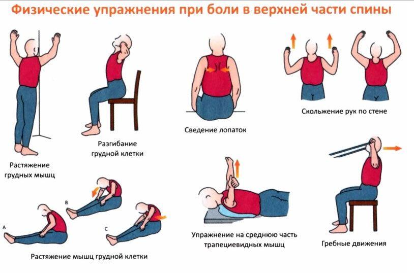 гимнастика при остеохондрозе спины грудной отдел так думал