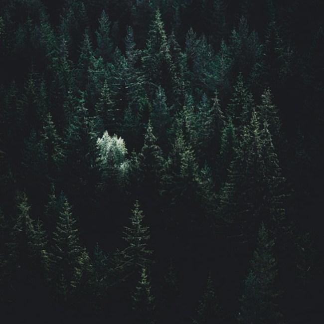 clt utilisation forêt écologie suisse