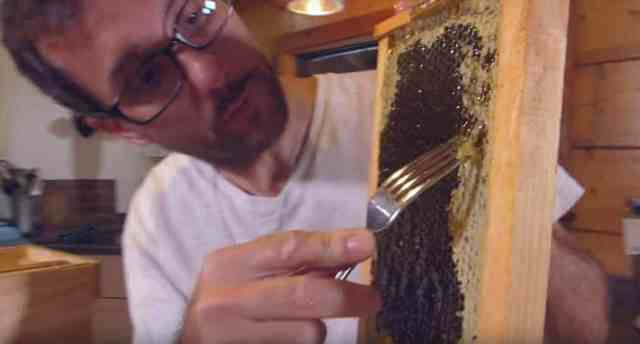 Man using a form to uncap combs on a hive frame.