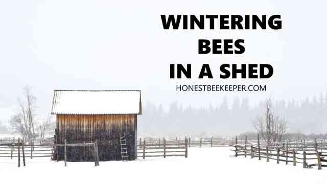Wintering Bees in a Shed- Honest Beekeeper