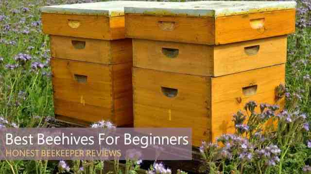 Best Beehives for Beginners