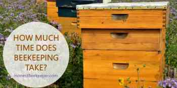 How Much Time Does Beekeeping Take? It's More Than You Think