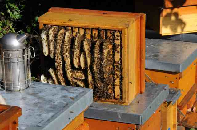 how to move bees from one hive to another