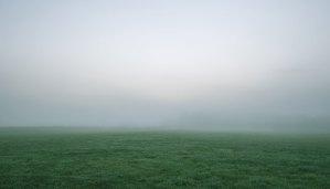 foggy-dawn-grassy-field