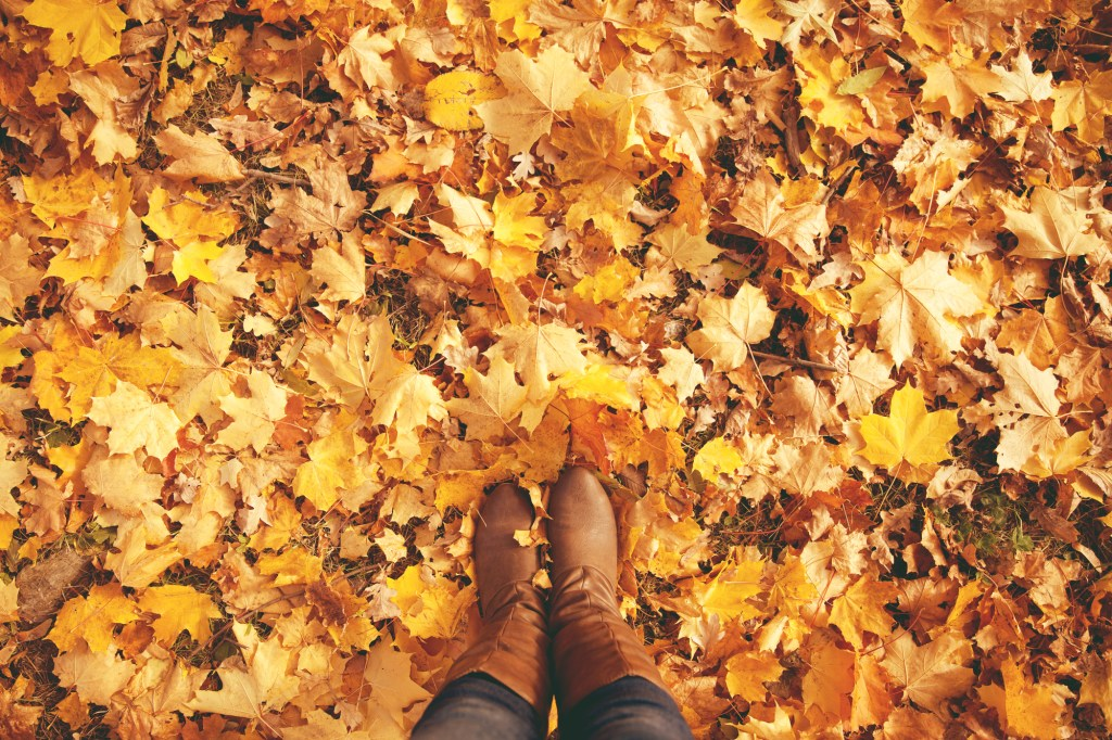 Boots walking in leaves