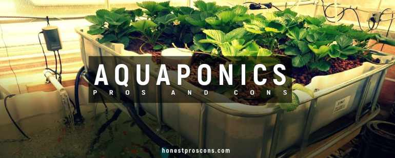 Pros and Cons of Aquaponics