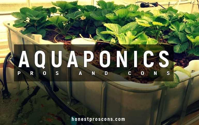 Pros and Cons of Aquaponics