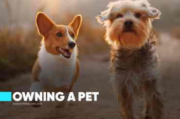Pros and Cons of Owning a Pet