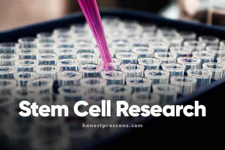 Pros and Cons of Stem Cell Research
