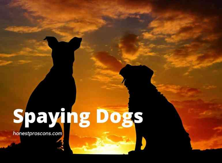 Advantage and Disadvantage of Spaying Dogs