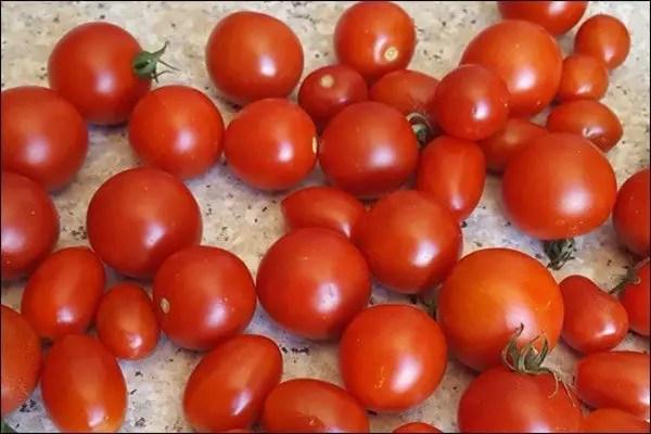 Tomaten trocknen - so geht das