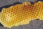 Do bees move eggs?