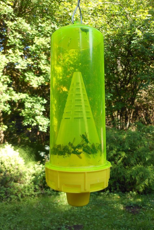Yellowjacket traps - Honey Bee Suite