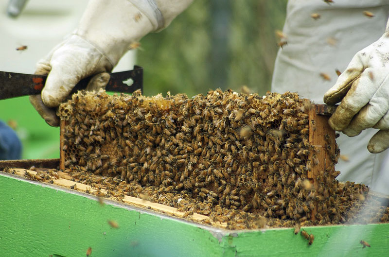 How to open the brood nest - Honey Bee Suite