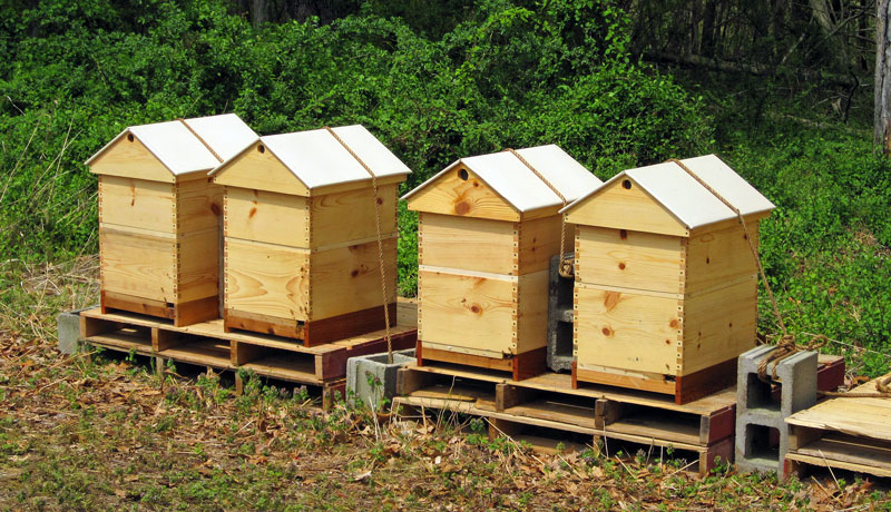 Hives With Ventilated Gabled Roofs. Hives, Covers, And Photo By Bill Castro.