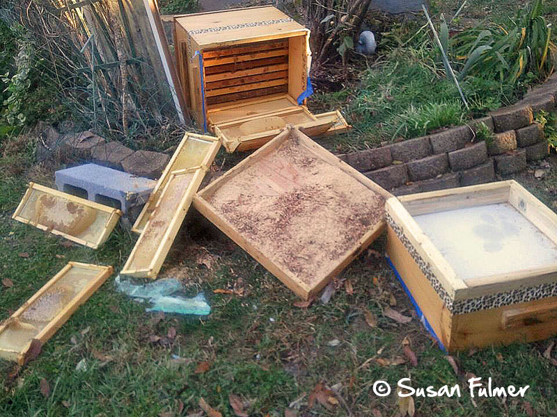 Pennsylvania bears toppled this hive twice in three days. Photo courtesy of Susan Fulmer.