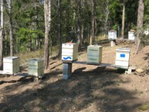 Bee hives in the run by Max Lindegger.