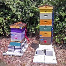 Colorful hives by by Mary McElhinney.