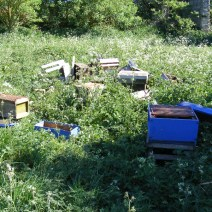 Hives struck by vandals in Northamptonshire, UK. Photo by Brian Dennis.