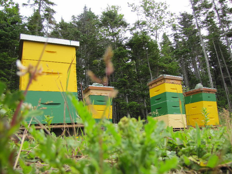 "Half of Phillip and Jenny's hives in Newfoundland. According to Phillip, this is ""where all my troubles began."""