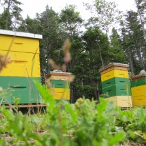 """Half of Phillip and Jenny's hives in Newfoundland. According to Phillip, this is """"where all my troubles began."""""""