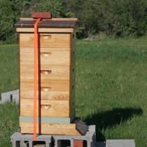 Hive by Mary McElhinney, Rochester NY.