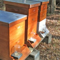Lizards on Louisiana hives by Helen C.