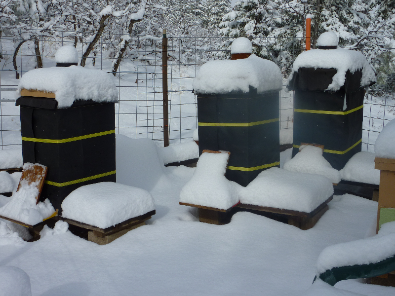 Steve says: My hives are encased in 2 inch rigid foam and wrapped with tar paper. The gallon can on top is full of sand as a dead weight. In the middle background is a solar powered electric bear fence. Beekeeping in Colorado!