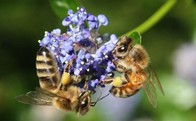 Sharing-a-flower