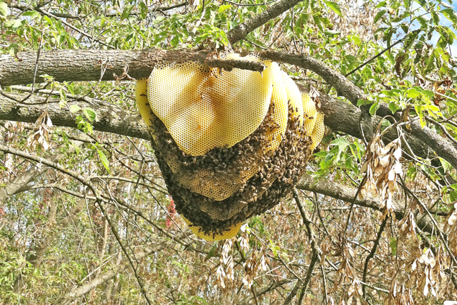 Comb-in-tree