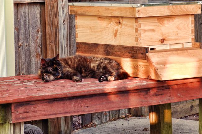 Guard cat. © Craig Scott.