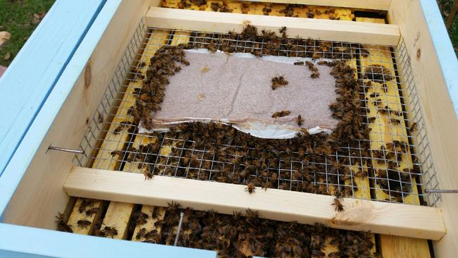 Honey Bee Pollen Feeder