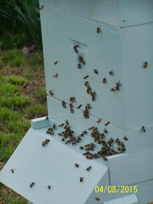 Active-bees-David-Manning