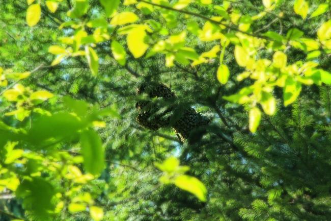 Swarm-in-a-tree-again