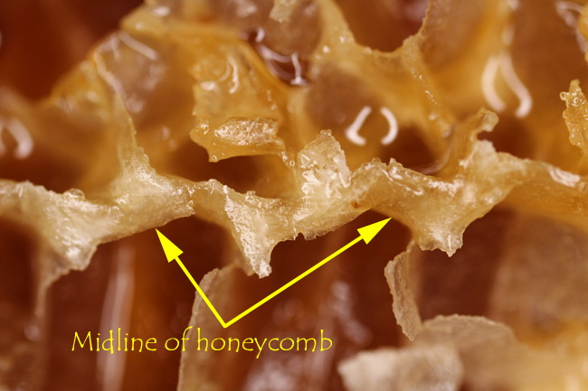 Honeycomb-with-foundation