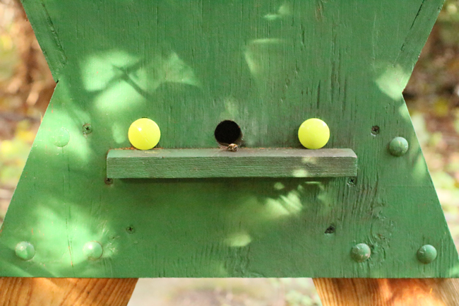 Wooden-plugs-in-top-bar hive