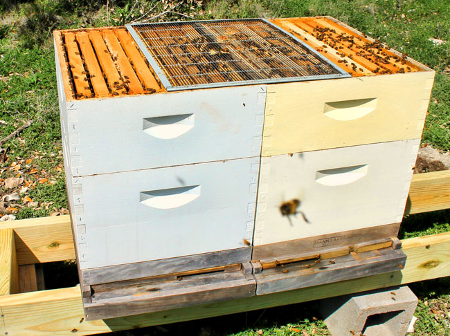 Double-queen-hive-with-excluder-Laura-Colburn