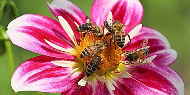 The Science of Bees - Honey Bee Suite - photo#49