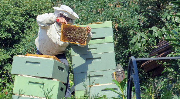 Tippy-hives. Not every beekeeper needs a mentor.