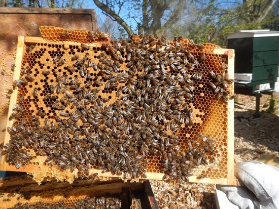 Two phases make up the beekeeping year: expansion and contraction.