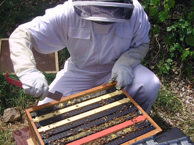 My rule for hive inspections: Know your mission.