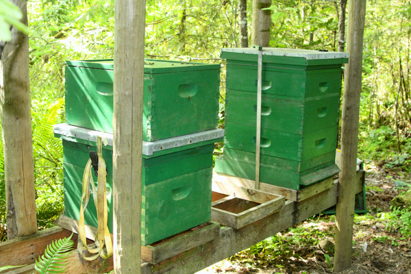This is the back of the two hives.