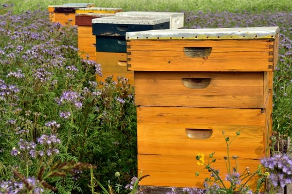 Will the beekeeping bubble burst when the mental image no longer reflects reality?