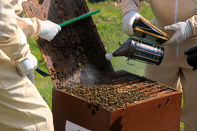 The cost to start beekeeping: In addition to bees and a hive, you may want a smoker, brush, hive tool, gloves, and a protective suit.