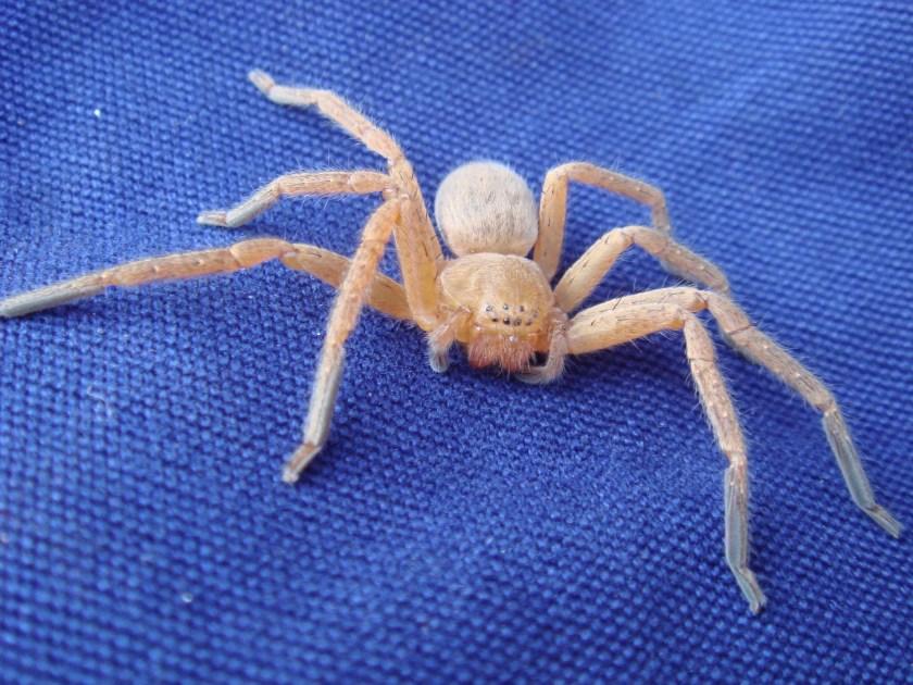 spider-1904780_1920