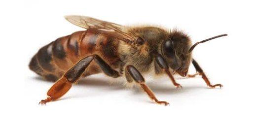 κυψέλη μελισσών
