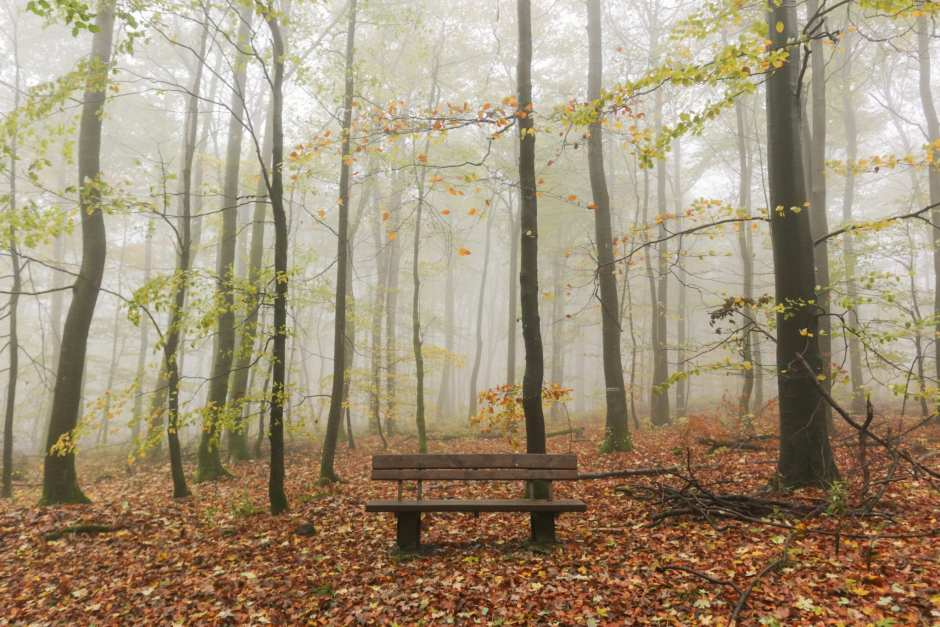 alone time bench woods