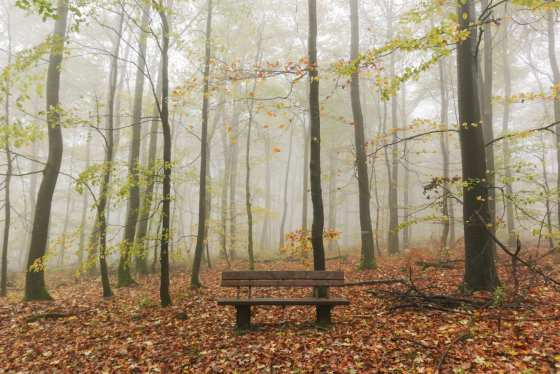 alone time bance woods