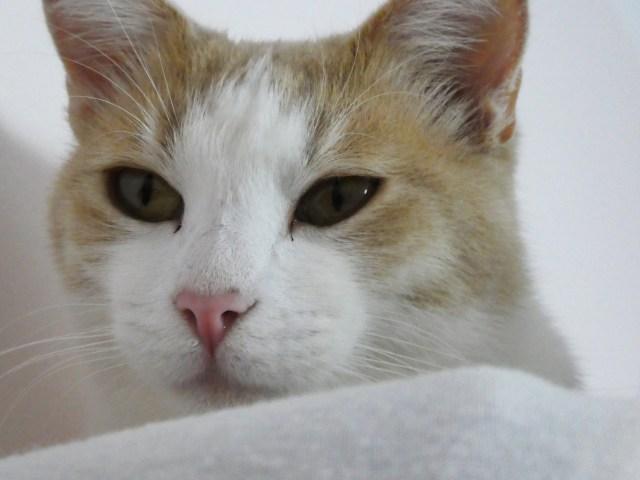 PC The Cat